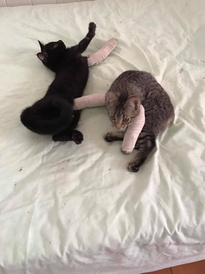 Как делать массаж задних лап кошкам и котам