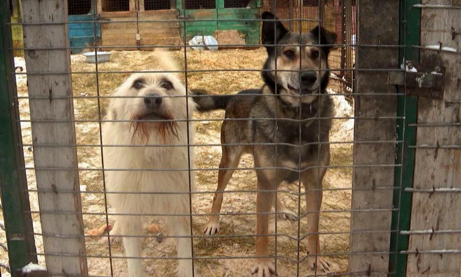 Организация защиты животных «Четыре лапы» бесплатно стерилизует 300 бездомных животных