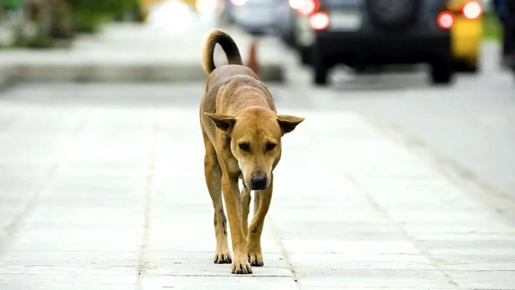 Как найти собаку, если она убежала и потерялась