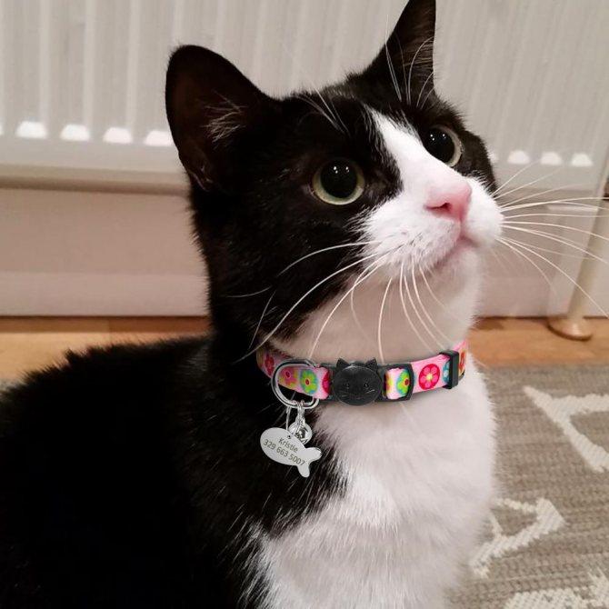 Ошейник от блох для кошек и клещей: как действует