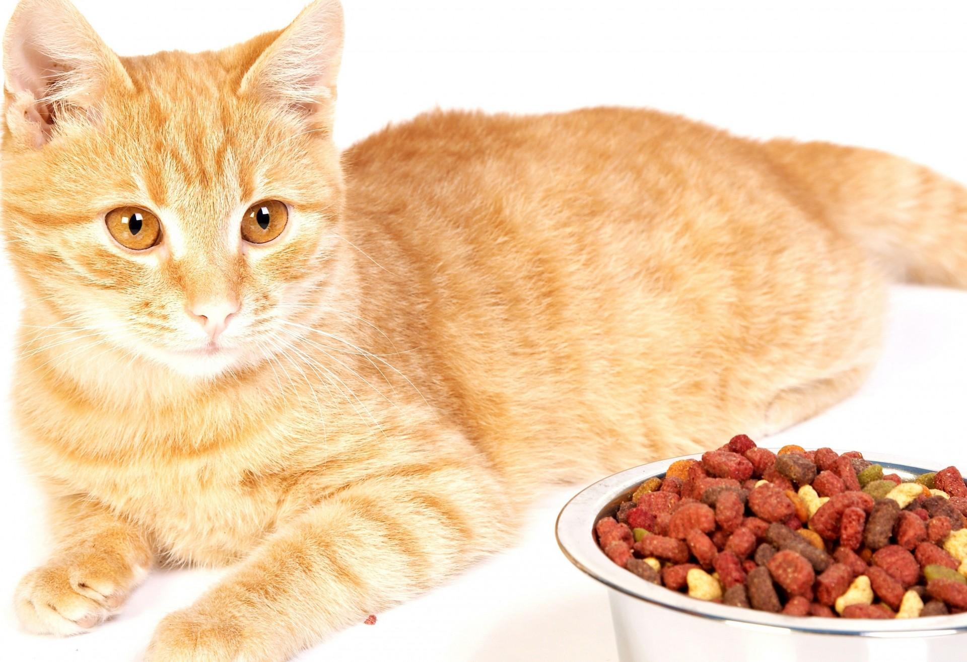 Как заставить кота есть, если он отказывается от еды