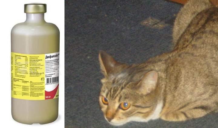 ПрепаратДюфалайт: особенности применения для кошек