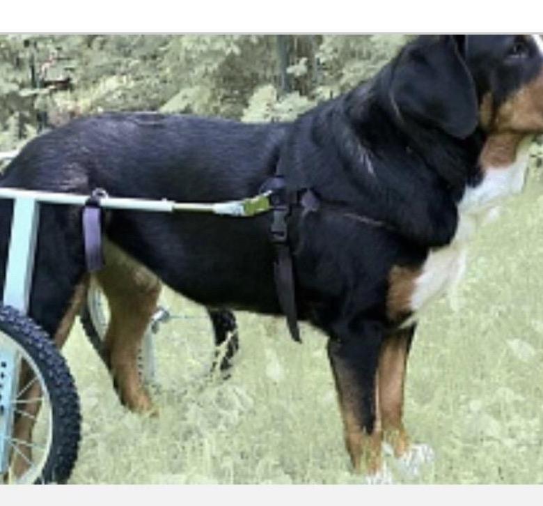 Инвалидная коляска для собак для задних конечностей