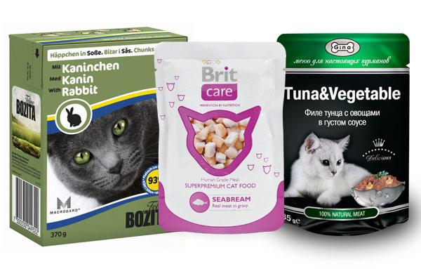 Корм для котят: какой лучше, рейтинг сухих и жидких вариантов