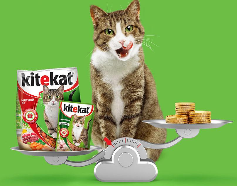 Обзор корма «Китикет» для кошек