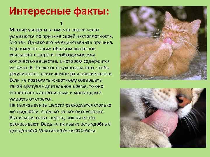 Интересное о кошках