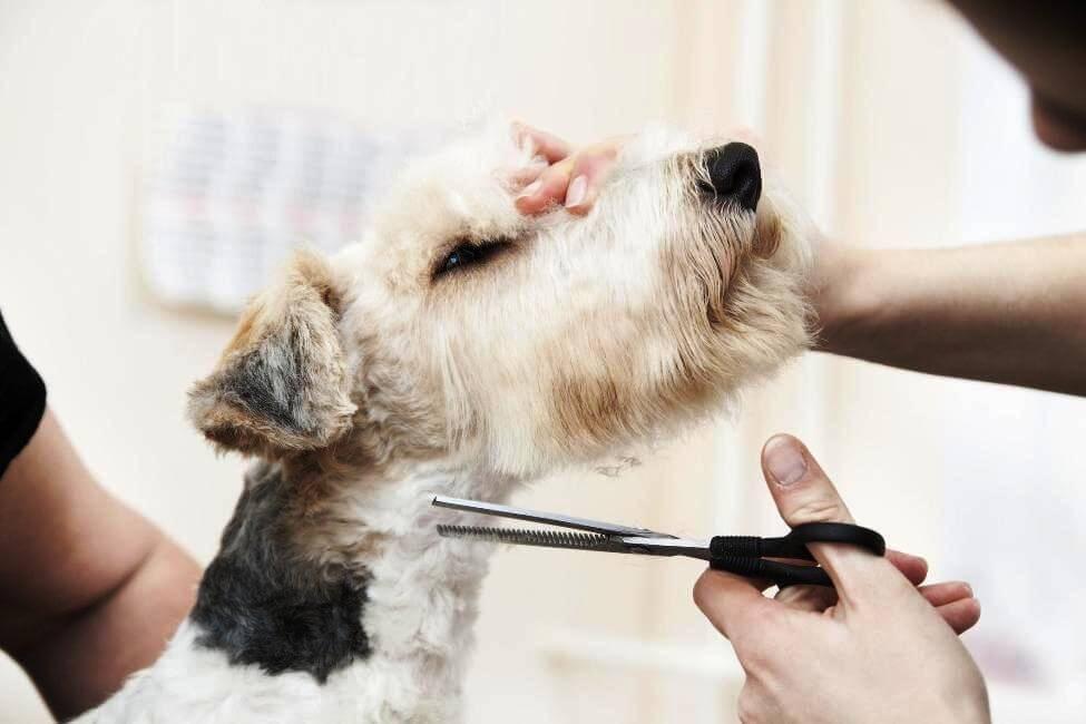 Как подстричь собаку в домашних условиях