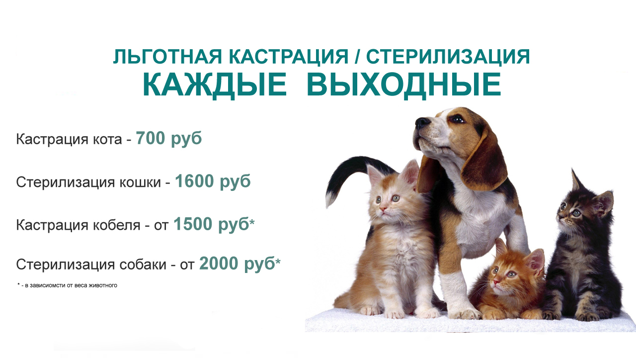 Кастрация собак: в каком возрасте и нужно ли это