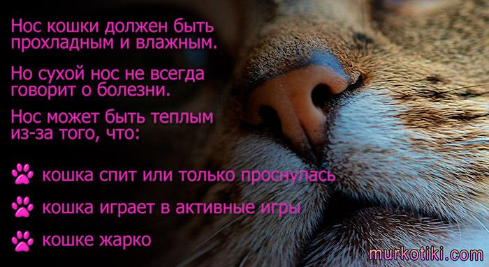 Мокрый нос у кота: почему он холодный и что это значит