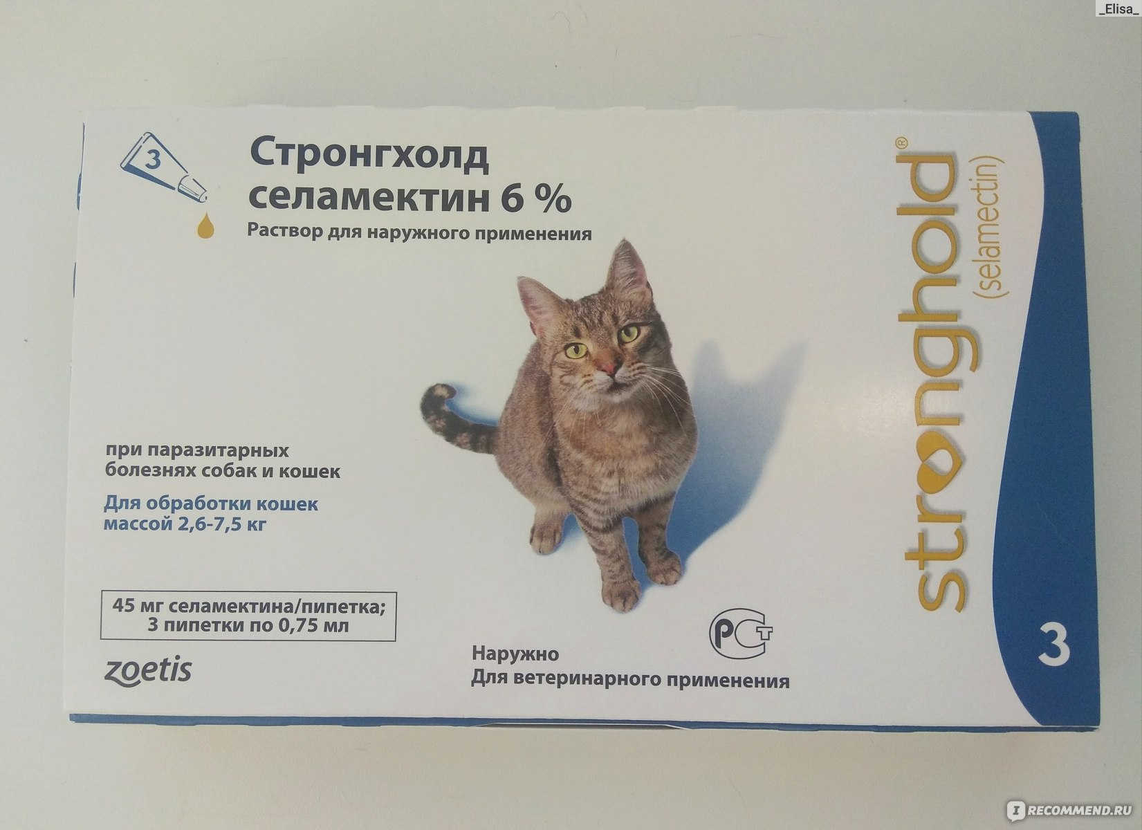 Народные средства от блох у кошек