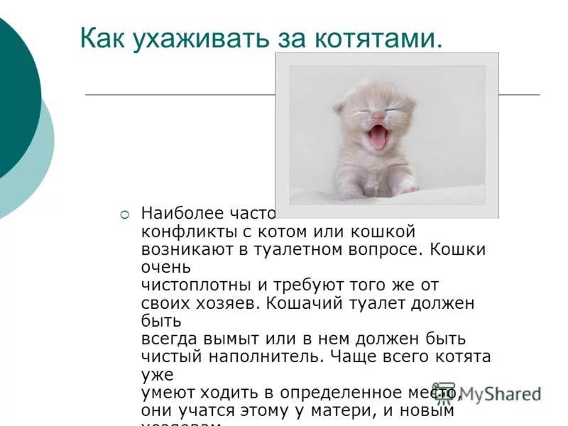 Чем кормить котенка в 3-4 месяца?