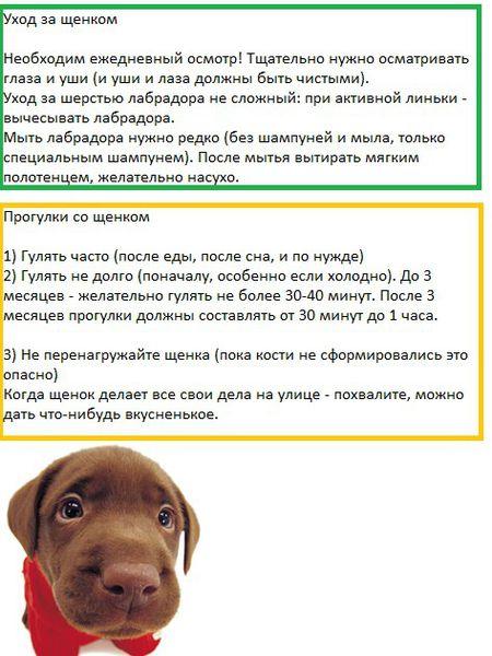 В каком возрасте лучше брать щенка домой