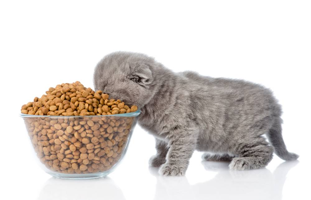 Рейтинг кормов для кошек 2019: как выбрать лучший