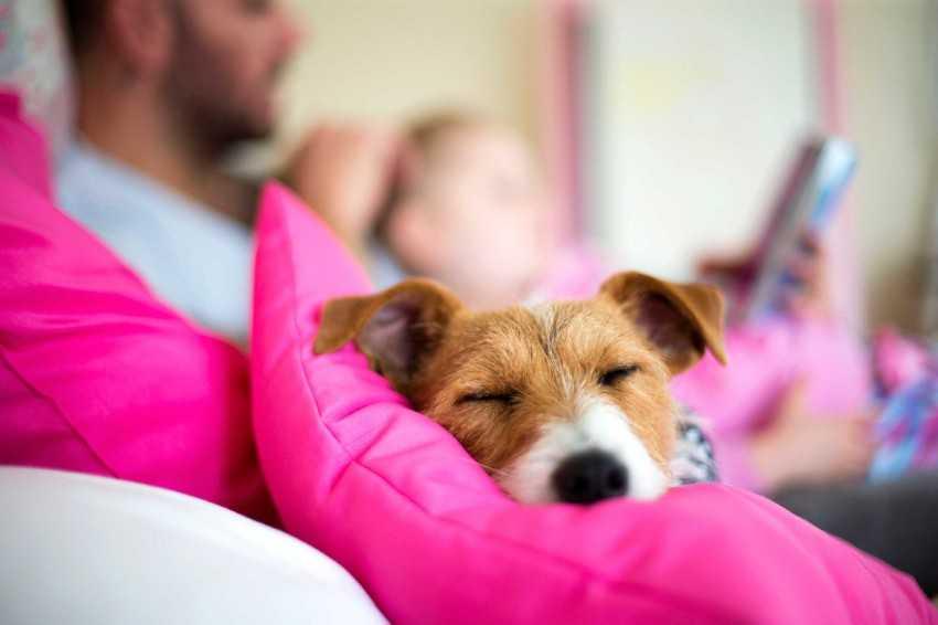 Как избавиться от запаха псины от собаки