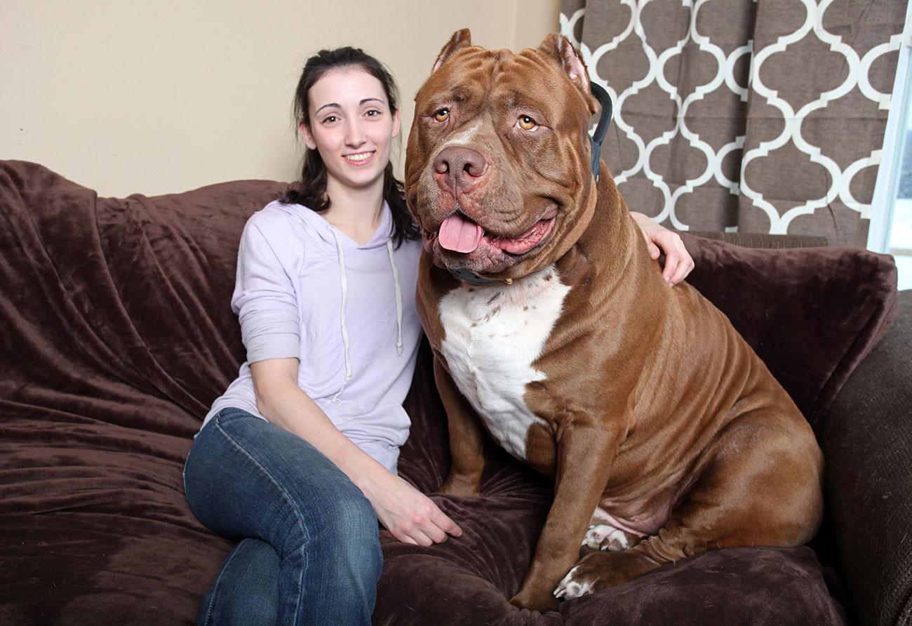 Топ-6 пород собак, которые не заступятся за своего хозяина