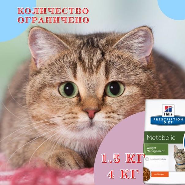Чем и как промыть глаза котенку или кошке