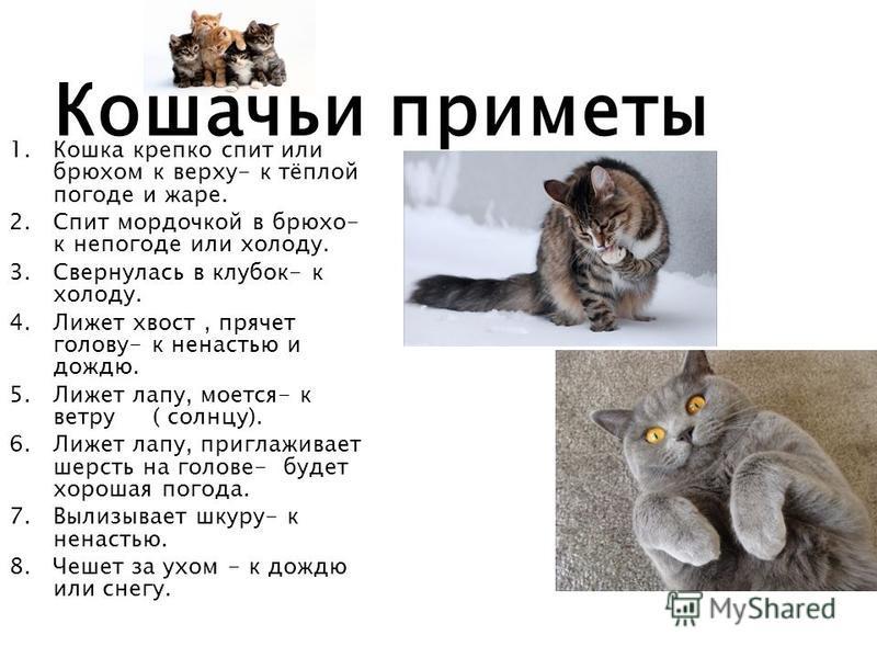 Где и почему запрещены домашние кошки?