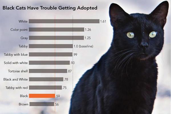 Как назвать черного кота: выбор клички для мальчика и девочки