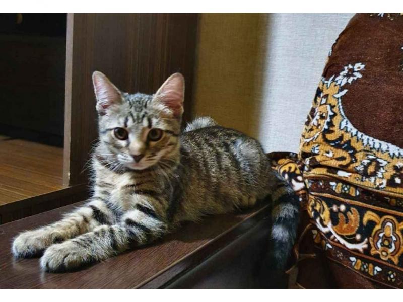 Сколько живут сфинксы: кошки и коты