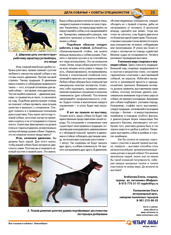 Ринговка для собак: что это такое и для чего нужно