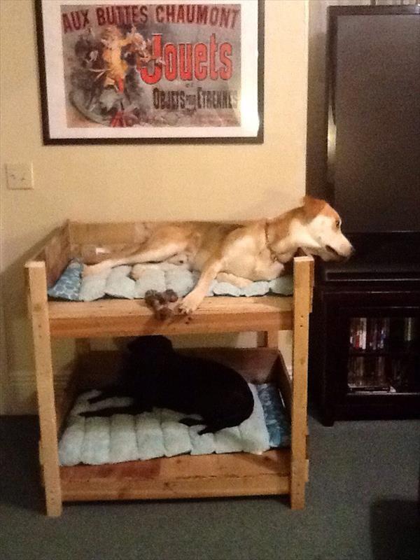 Как не подпускать собаку к мебели