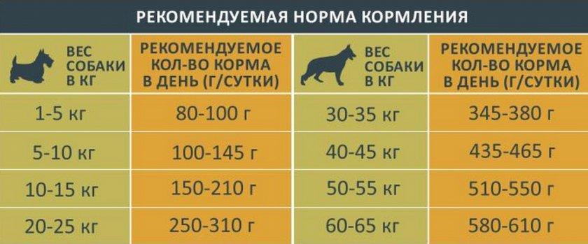 Выбор правильного типа питания для кошки