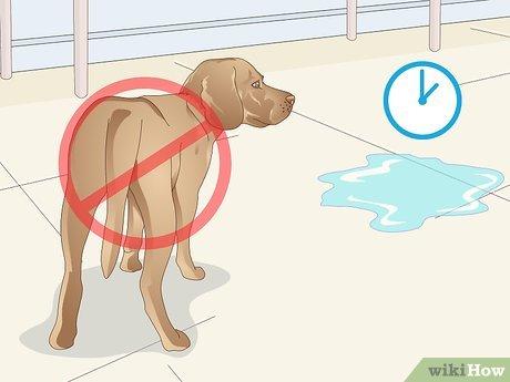 У кошки или кота недержание мочи: что делать?