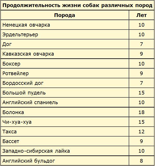 Сколько живут шарпеи в домашних условиях