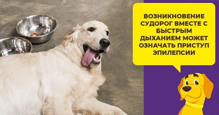 Собака часто дышит и тяжело с открытым ртом высунув язык