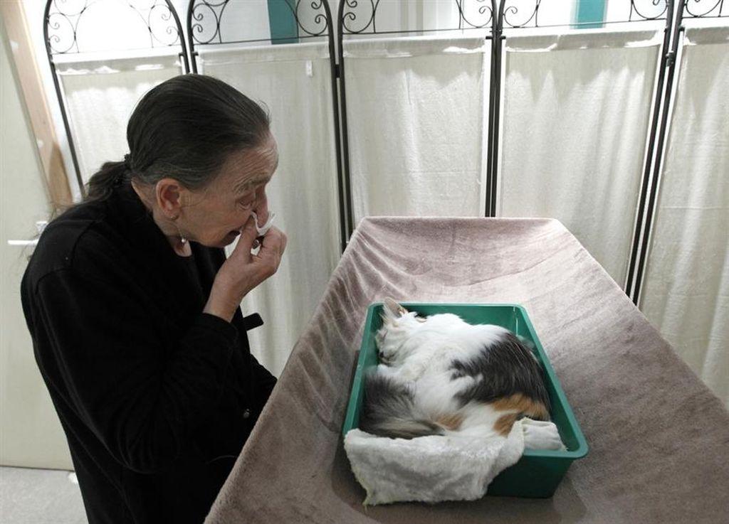 Как справиться с болью от утраты кошки