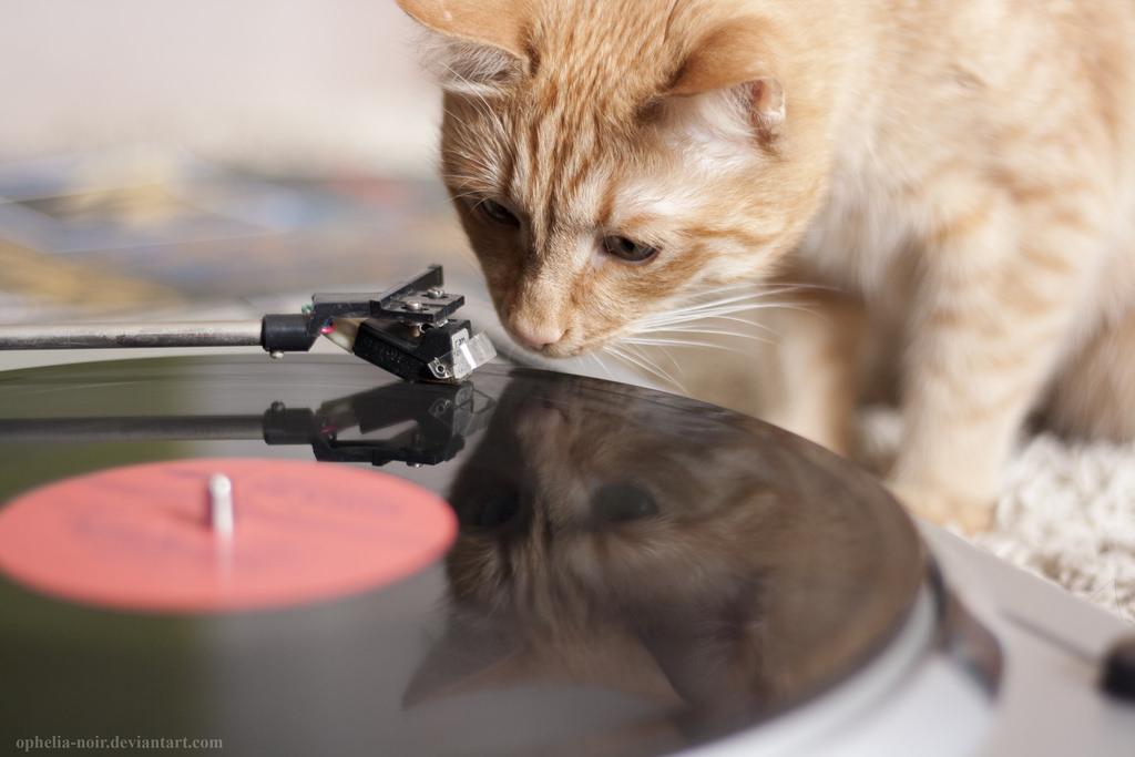 Успокаивающая музыка для кошек