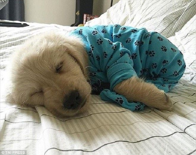 Как приучить щенка спать ночью на своем месте одному