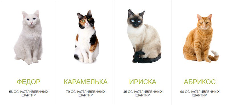 Выбор кошки или кота: как выбрать