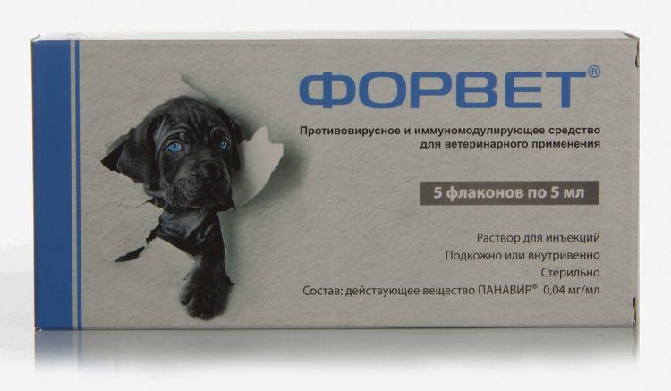 Х-ГИА для собак