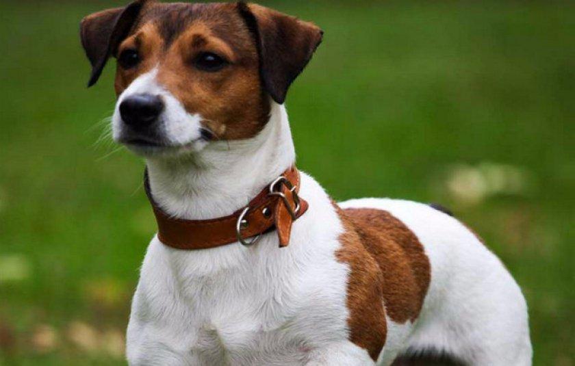 Собака Майло (порода как в Маске): история и описание