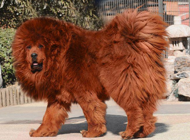Сколько стоят самые дорогие собаки