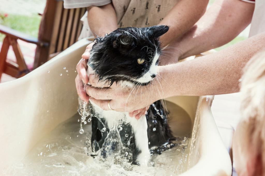 Как часто можно мыть кошку — сколько раз в месяц и примеры когда нельзя
