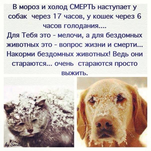 Какой нос должен быть у здоровой собаки