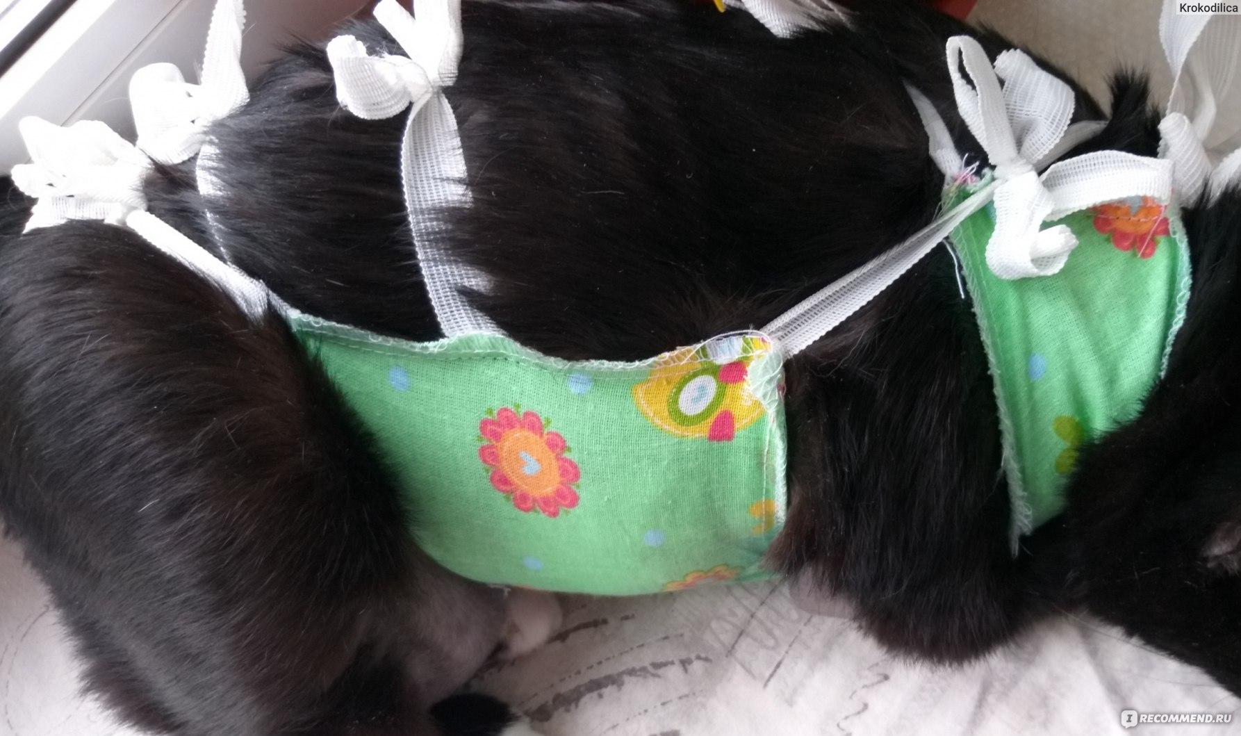 Сколько носить попону после стерилизации кошки