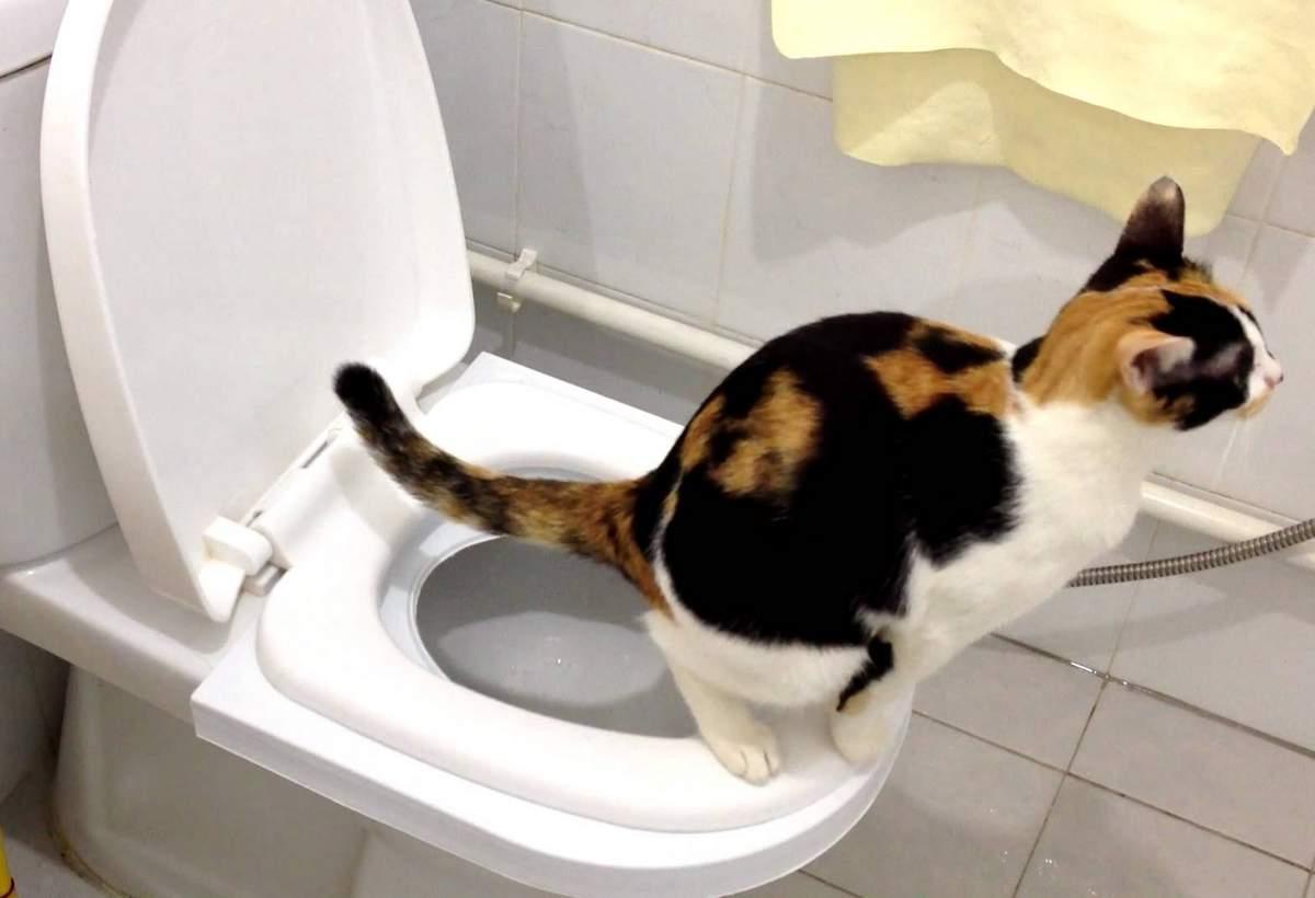 Кот не может сходить в туалет