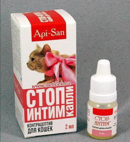 Можно ли давать противоглистное беременной или кормящей кошке