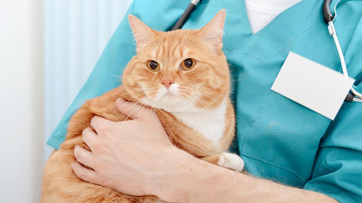 Панкреатит у кошек: причины патологии, лечение и профилактика