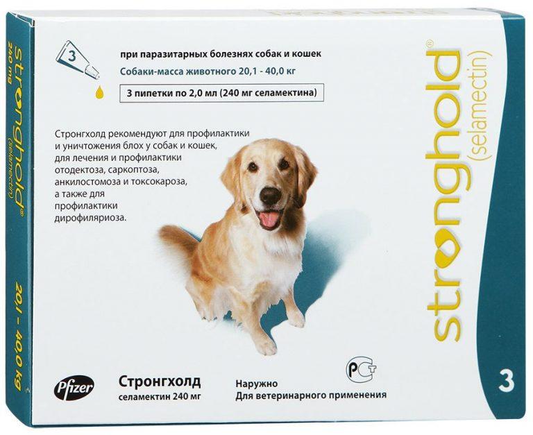 Глисты у собаки: признаки, как понять у мелких пород