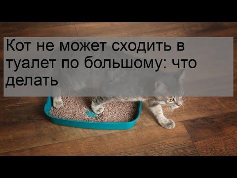 Запор у кошки — помощь питомцу в деликатной проблеме