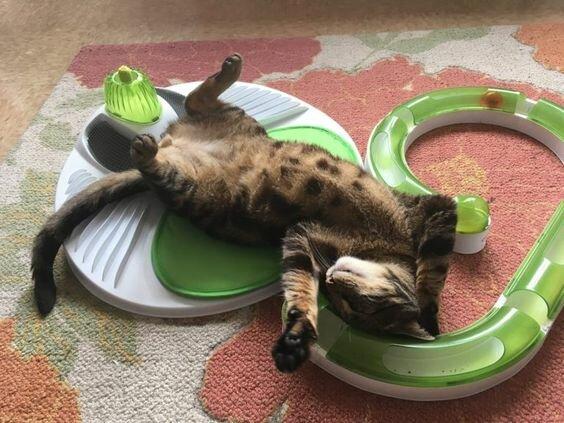 10 кошачьих привычек, от которых в восторге все хозяева