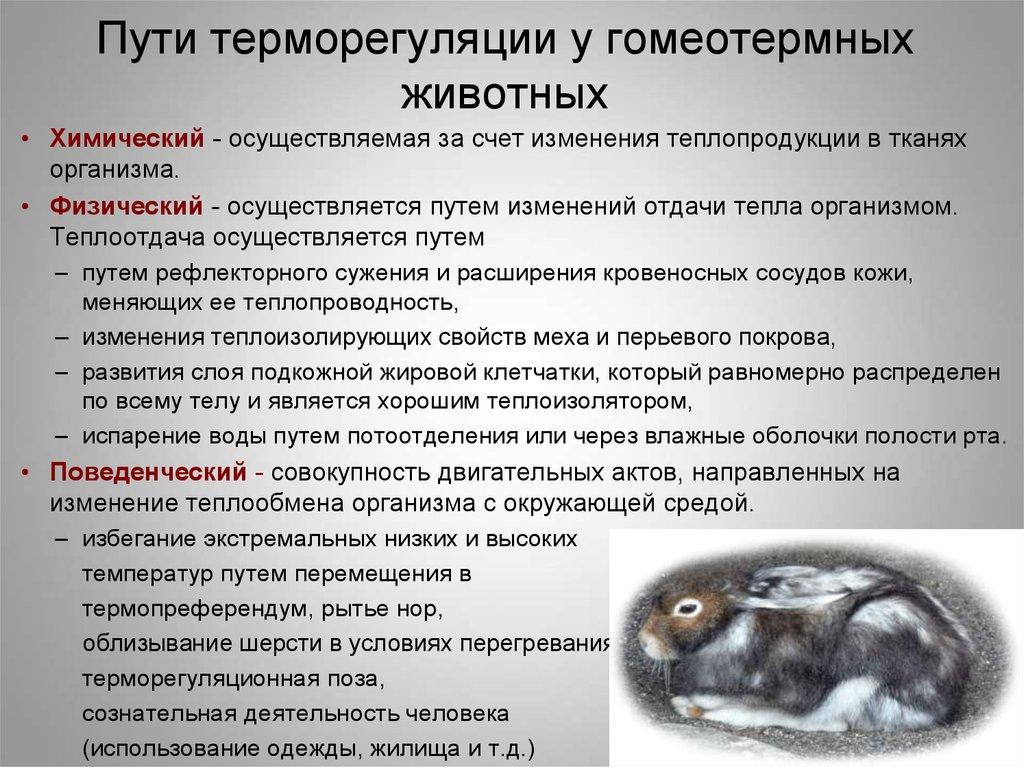 Спасаем кошку от жары: особенности терморегуляции и помощь при перегревании