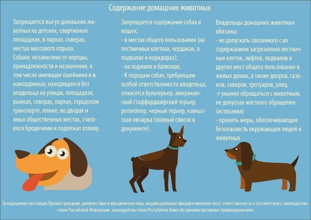 Как приучить собаку оставаться одной в квартире