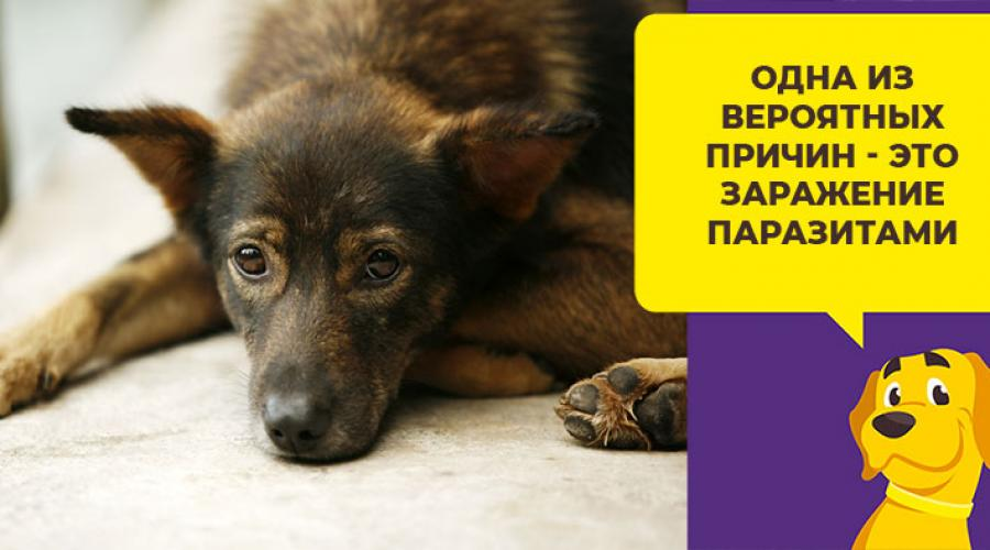 Собака чихает и фыркает: что это значит и что делать