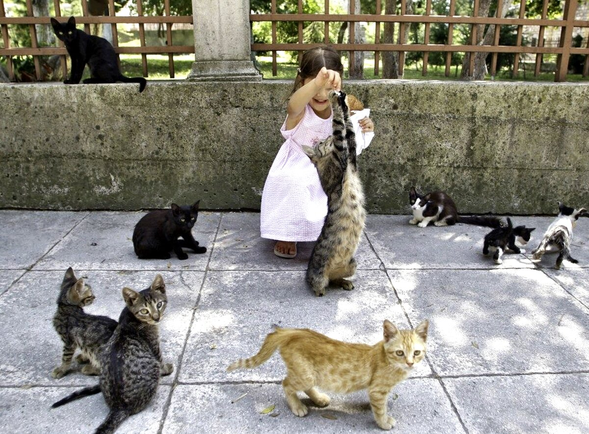 Как относятся к кошкам в разных странах