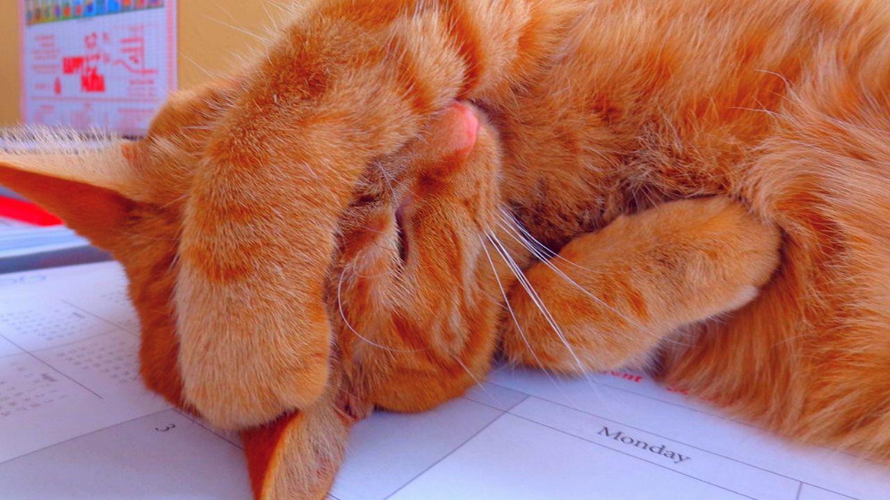 Как вывести кошку или кота из стресса?